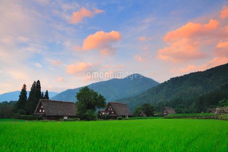 夏の白川郷に夕焼けの写真素材 [FYI02087526]