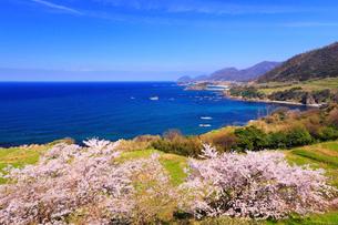丹後松島のサクラと日本海の写真素材 [FYI02087534]