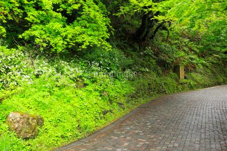 山中温泉 新緑の遊歩道の写真素材 [FYI02087572]