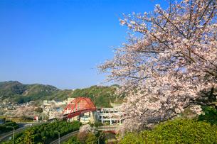 音戸大橋とサクラの写真素材 [FYI02087597]