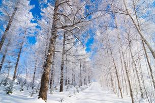 霧氷の森と道の写真素材 [FYI02087689]
