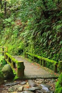 山中温泉 鶴仙峡遊歩道の写真素材 [FYI02087725]