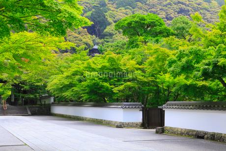 新緑の参道の写真素材 [FYI02087866]