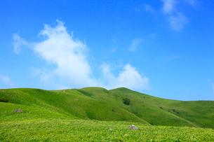 美ヶ原高原 緑の草原の写真素材 [FYI02087887]