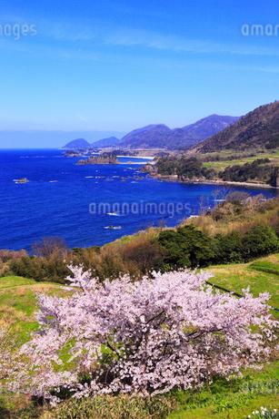 丹後松島のサクラと日本海の写真素材 [FYI02087922]