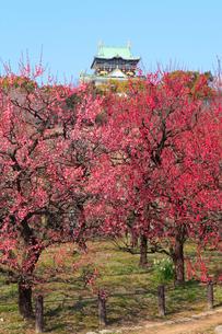 大阪城と大阪城公園の梅林の写真素材 [FYI02088103]