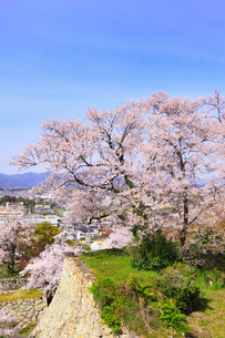 津山城・鶴山公園のサクラと津山市街の写真素材 [FYI02088116]