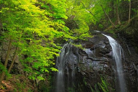 新緑の不動滝の写真素材 [FYI02088126]
