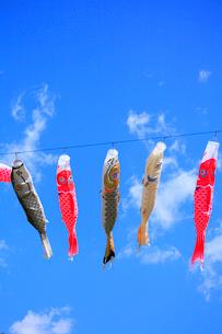 鯉のぼりと青空の写真素材 [FYI02088161]