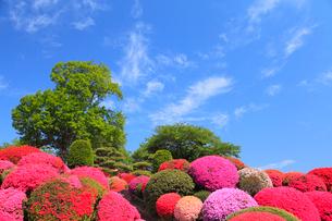 鶴峯公園 ツツジと新緑の樹に青空の写真素材 [FYI02088197]
