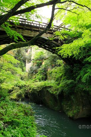 山中温泉 新緑のこおろぎ橋の写真素材 [FYI02088262]