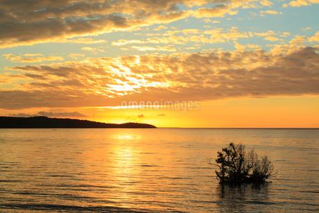沖縄西表島 前良川のマングローブと朝焼けに染まる海の写真素材 [FYI02088309]