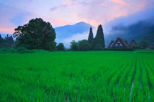 夏の白川郷に朝焼けの写真素材 [FYI02088310]