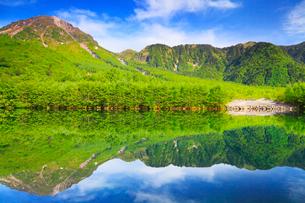 緑の上高地 大正池と焼岳の写真素材 [FYI02088349]