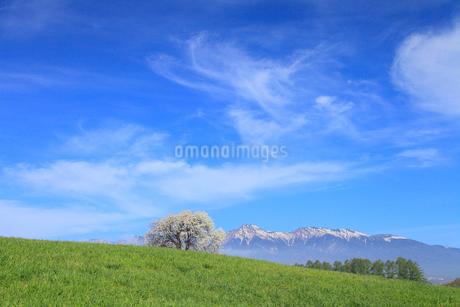 野辺山高原 ヤマナシの木と八ヶ岳の写真素材 [FYI02088353]