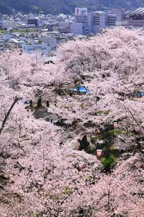 津山城・鶴山公園のサクラと津山市街の写真素材 [FYI02088489]