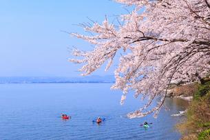 海津大崎のサクラと琵琶湖 カヌーの写真素材 [FYI02088534]