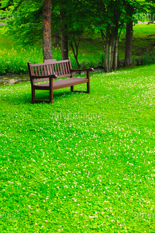 公園のベンチと新緑の写真素材 [FYI02088604]