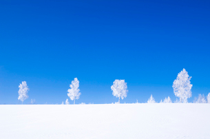 霧氷の木々の写真素材 [FYI02088626]
