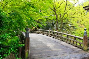 山中温泉 新緑のこおろぎ橋の写真素材 [FYI02088634]