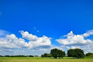 緑の草原と木立に青空の写真素材 [FYI02088680]