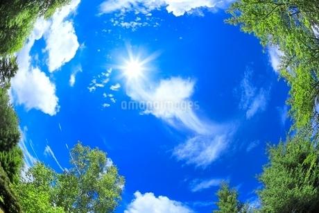入道雲と太陽に木の写真素材 [FYI02088831]