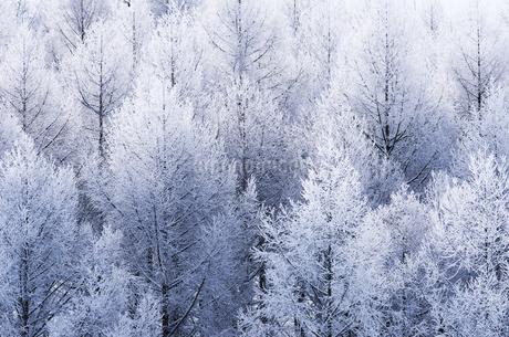 霧氷の木々の写真素材 [FYI02088857]