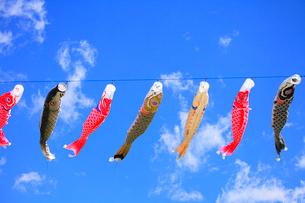 鯉のぼりと青空の写真素材 [FYI02088892]