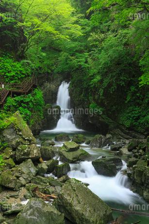 緑の厳立峡 三ツ滝と遊歩道の写真素材 [FYI02088941]