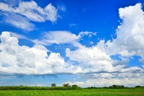 緑の草原と青空に雲の写真素材 [FYI02088998]