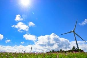 コスモスの花畑に風車の写真素材 [FYI02089000]
