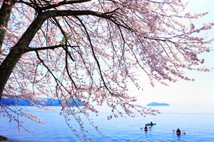 海津大崎のサクラに太陽光 琵琶湖と竹生島 カヌーの写真素材 [FYI02089005]