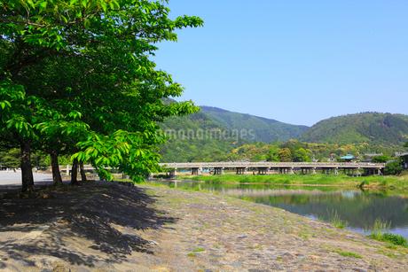 新緑の嵐山 渡月橋の写真素材 [FYI02089021]