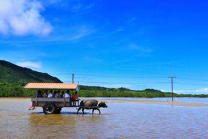 沖縄西表島 由布島の水牛車の写真素材 [FYI02089046]
