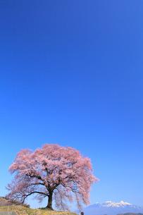 王仁塚の桜と八ヶ岳の写真素材 [FYI02089058]