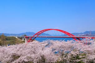 第二音戸大橋とサクラの写真素材 [FYI02089059]