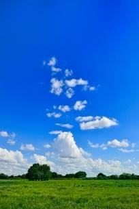 緑の草原と木立に青空の写真素材 [FYI02089104]