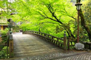 山中温泉 新緑のこおろぎ橋の写真素材 [FYI02089135]
