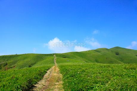 美ヶ原高原 緑の草原と一本の道の写真素材 [FYI02089145]