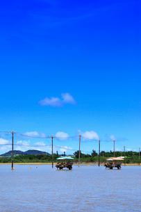 沖縄西表島 由布島の水牛車の写真素材 [FYI02089150]