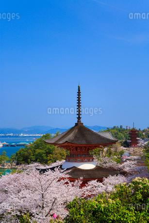 宮島のサクラ 厳島神社多宝塔と瀬戸内海の写真素材 [FYI02089159]