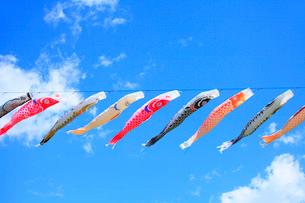 鯉のぼりと青空の写真素材 [FYI02089170]