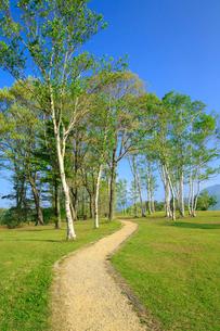 新緑の蒜山高原 シラカバの木立と小道の写真素材 [FYI02089225]
