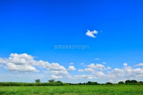 緑の草原と青空に雲の写真素材 [FYI02089246]