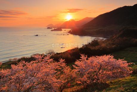丹後松島のサクラと朝日 日本海の写真素材 [FYI02089341]