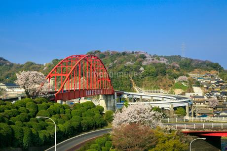 音戸大橋とサクラの写真素材 [FYI02089347]