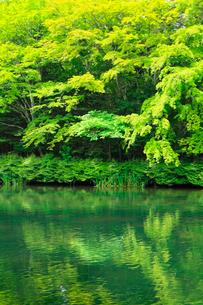 軽井沢 雲場池の緑の写真素材 [FYI02089432]