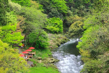 山中温泉 新緑の鶴仙峡の写真素材 [FYI02089438]