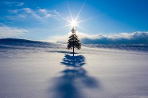 雪原にクリスマスツリーの木と夕日の写真素材 [FYI02089462]