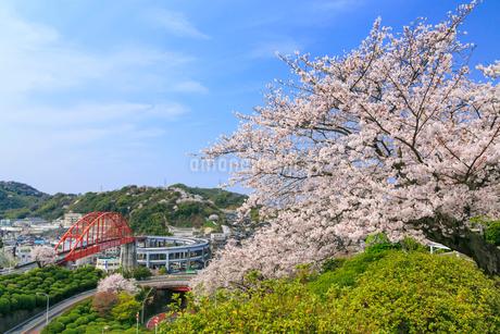 音戸大橋とサクラの写真素材 [FYI02089486]
